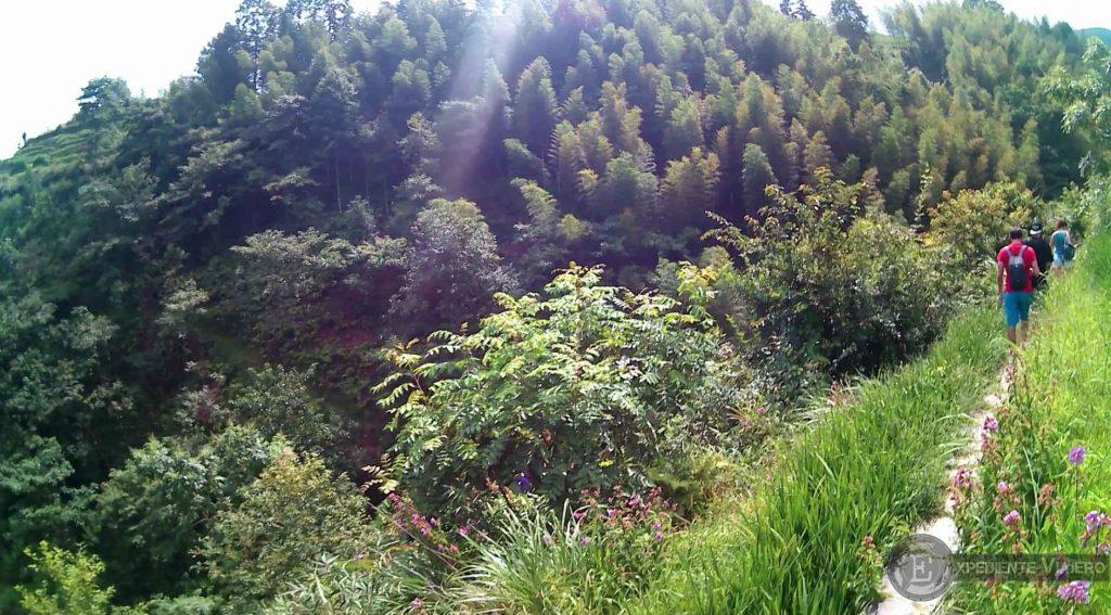cruzando campos de arroz longsheng