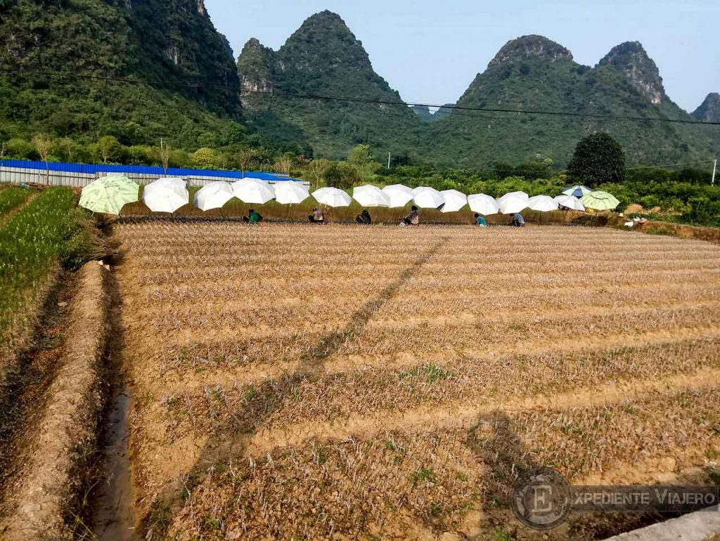 Mujeres agricultoras durante la ruta en bici por Yangshuo