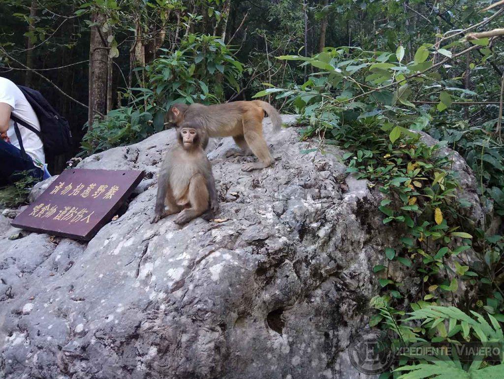 Monos al comienzo de Ten-mile Natural Gallery