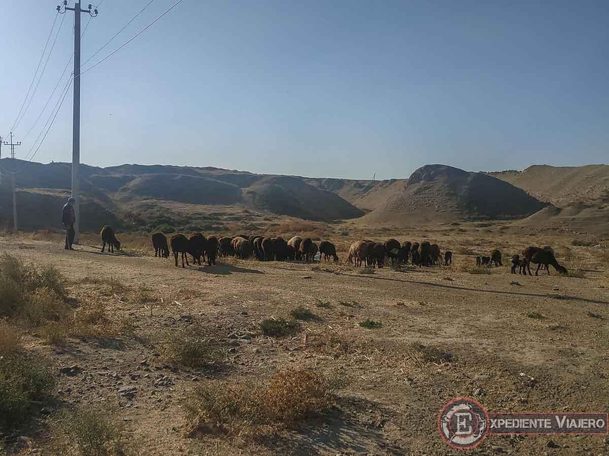 Samarcanda rural