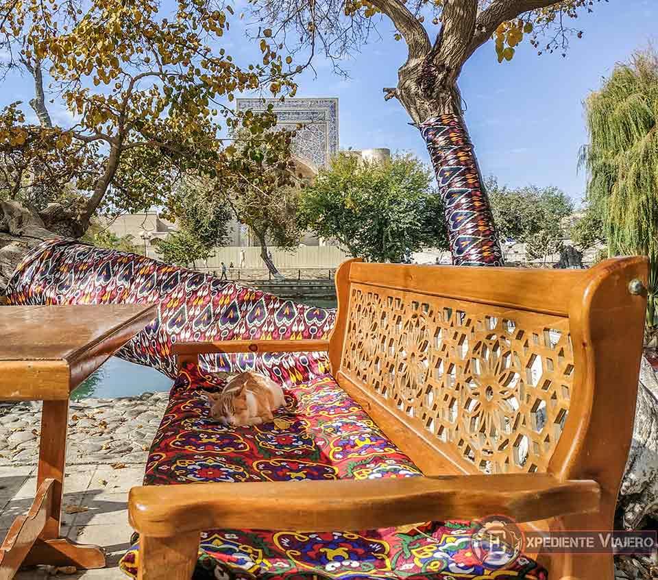 Siesta del gato uzbeko