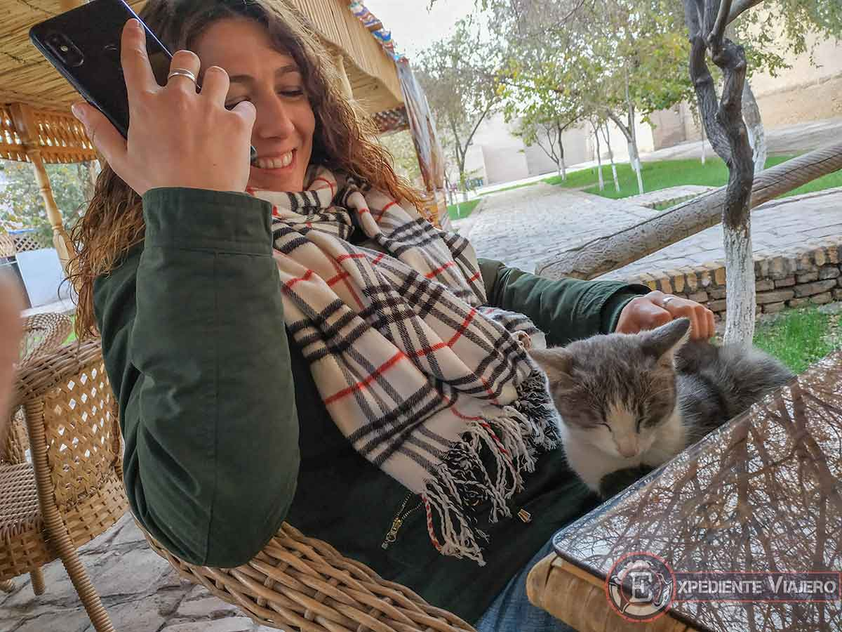 Gato cariñoso uzbeko
