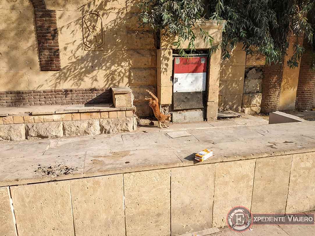 Gato en el Barrio Copto