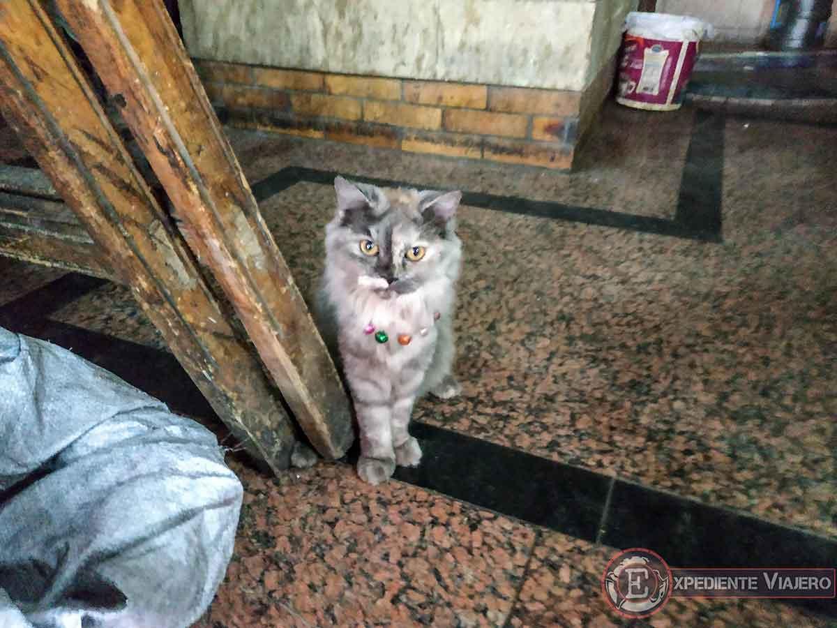 Gato en la tienda de las especias del zoco Jan el-Jalili