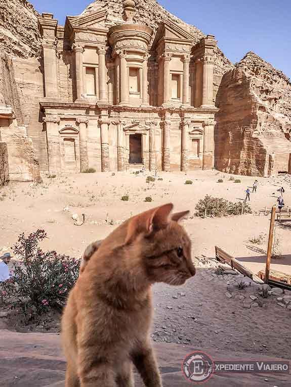 Gato en el Monasterio de Petra