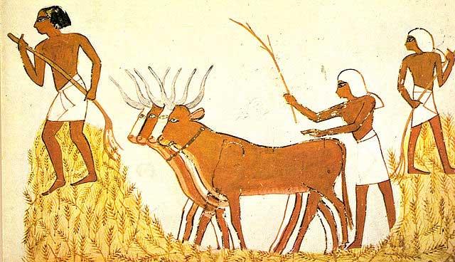 Trabajando el trigo para fabricar cerveza en el antiguo Egipto