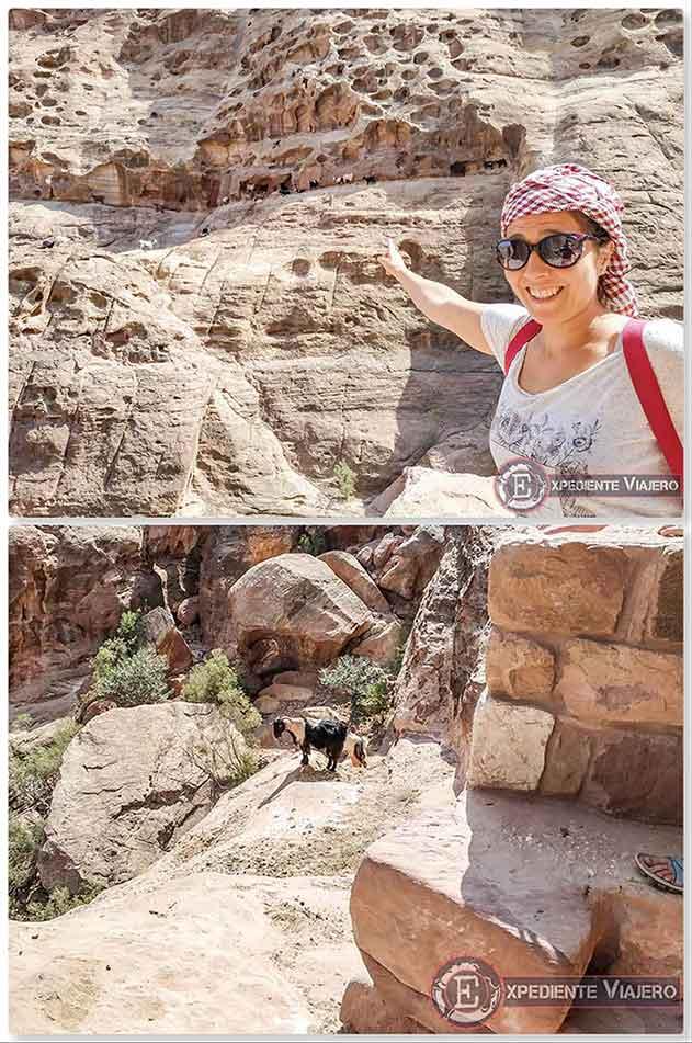 Las cabras montesas de Petra