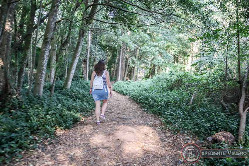 El bosque de Aldán
