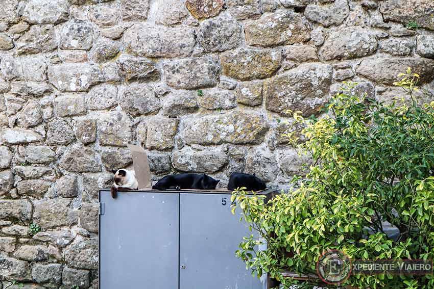 Gatos durmiendo en la Fortaleza de Valença