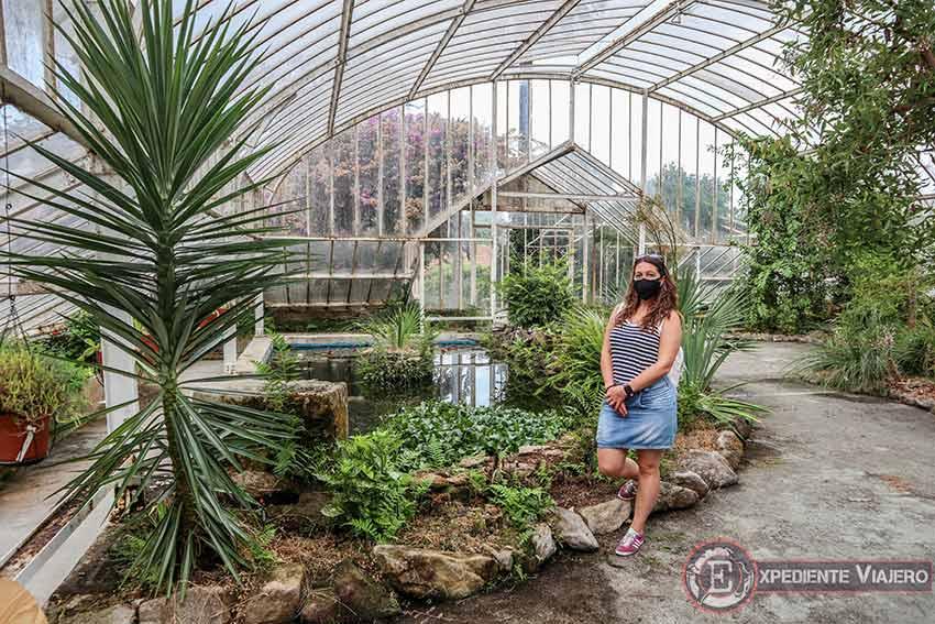 Plantas del invernadero del Pazo de Lourizán