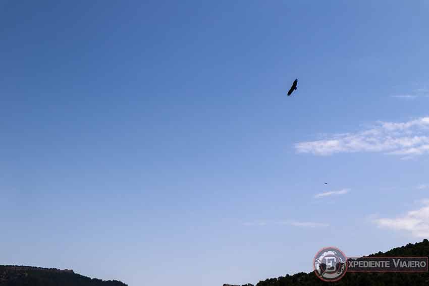 �guila sobrevolando el Ventano del Diablo (Cuenca)